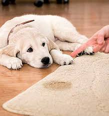 Prime Steamers - Pet Stain Removal Coral Springs 954-496-2289