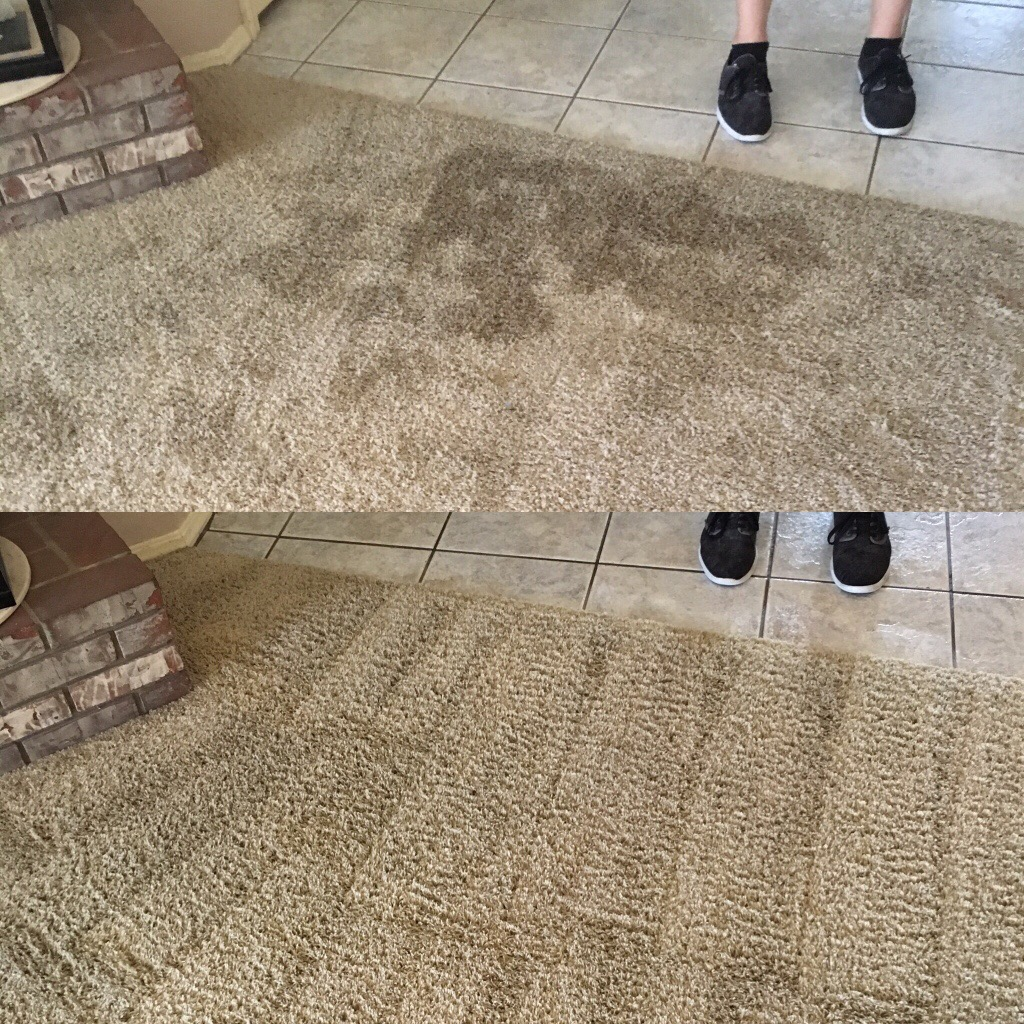 Prime Steamers - Pet Urine Removal Coral Springs 954-496-2289